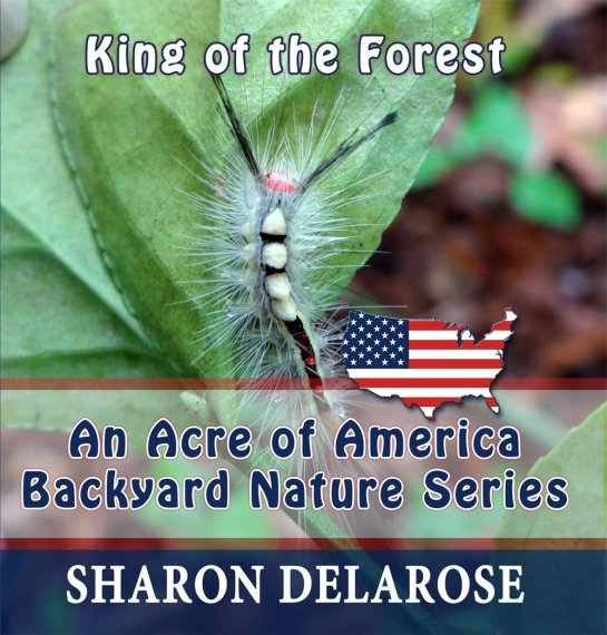 King of the Forest: An Acre of America Backyard Nature Series [Kindle Edition]